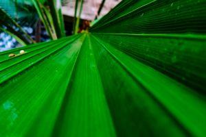 horizon hope parallel green leaves palm tree