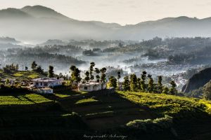 india nature canon landscape sunrise ooty winter