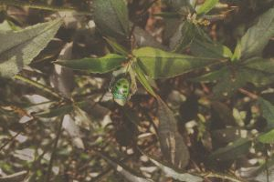 insect lady bug nature