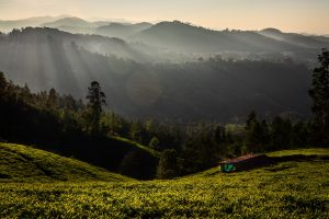 landscape ooty nature canon india sunrise winter