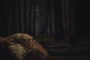 light scary eerie dark creepy fern plant wildlife trees sticks