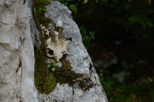 mothernature forest nature animal skull mother nature