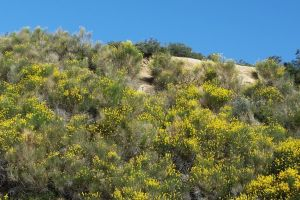 mountain hill yellow flowers yellow