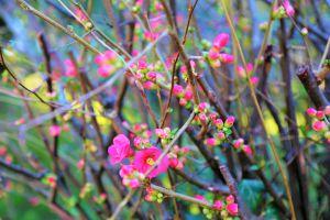 nature beautiful flowers trees