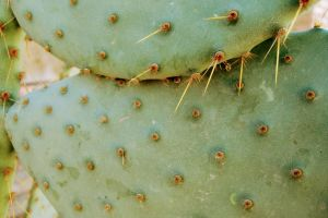 nature cactus desert green
