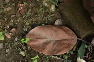 nature life earthy earth