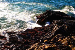 nature ocean beach sea