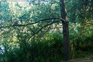 nature shore tree lake shore
