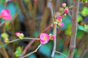 nature trees beautiful flowers