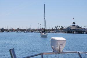 ocean boating harbor dolphins sealife yacht sunfish sailing