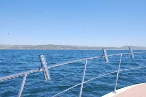 ocean harbor sunfish yacht sailing boating sealife