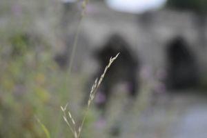 passage plants bridge concrete water tunnel blur structure zoom out flowers