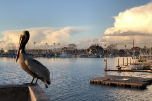 pier harbor fishing sunset pelicans sailboat sea lions