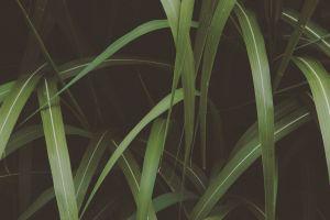plant outdoorchallenge grass green