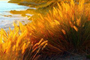plants foliage ocean beach nature