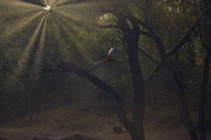 rays dawn dusk sun rays dawn forest