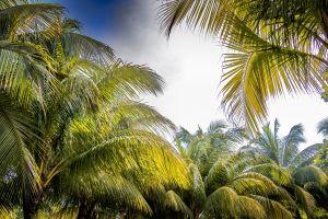 relaxation paradise sky palms beautiful vietnam palm leaf