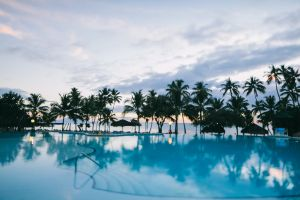 resort palm trees trees swimming pool coconut trees