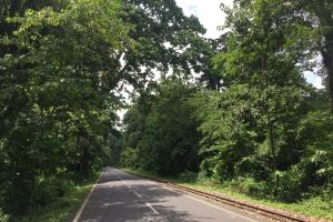 road empty street natue empty road