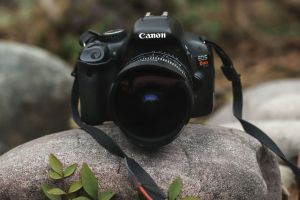 rock dslr nature camera