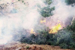 sad #mobilechallenge environment deforestation smoke bomb #outdoorchallenge hd wallpaper fire hope forest