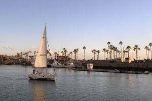 sea lions pelicans sunset sailboat fishing pier harbor