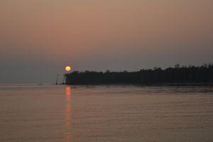 sea sunset mangrove forest sunset beach