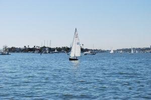 sealife ocean boating harbor sailing yacht