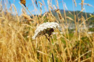 summer beautiful flowers flower bud flower wallpaper beautiful flower white flower flower