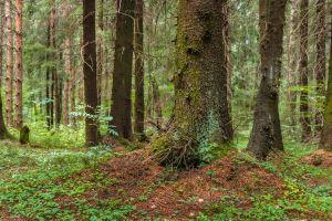 summer landscape forest