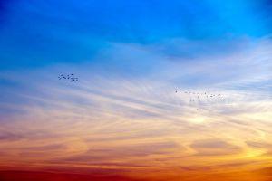 sun set colorful sky sky blue orange gradient geese