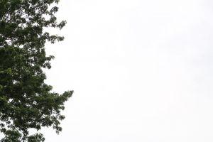 texture tree stormy sky sky grey sky