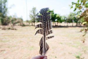 thailand feathers fields farm light focus feather blur blurred background