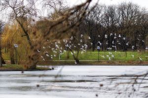trees gulls birds flying over lake nature flock of birds winter