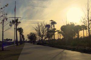 trees park sunrise dawn sunset path