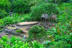 tropical garden maui