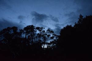 twilight forest cold blue black sky clouds blue sky chill