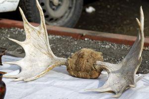 urban canvas antiques border car wheel ground close-up flea market deer antlers for sale