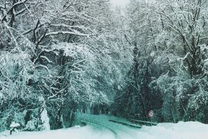 walkway snow street sign forest road sign tree winter branch snowing