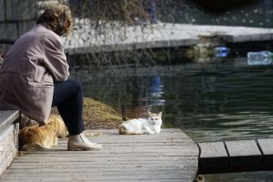 water relaxation relaxing nature pond cats near woman sitting bench park