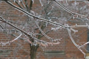 winter branches ice water droplets melting tree nature cold