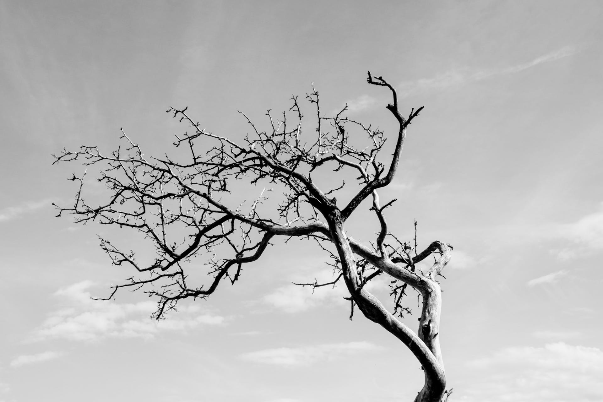 black white dancing tree tree nature sky free wood