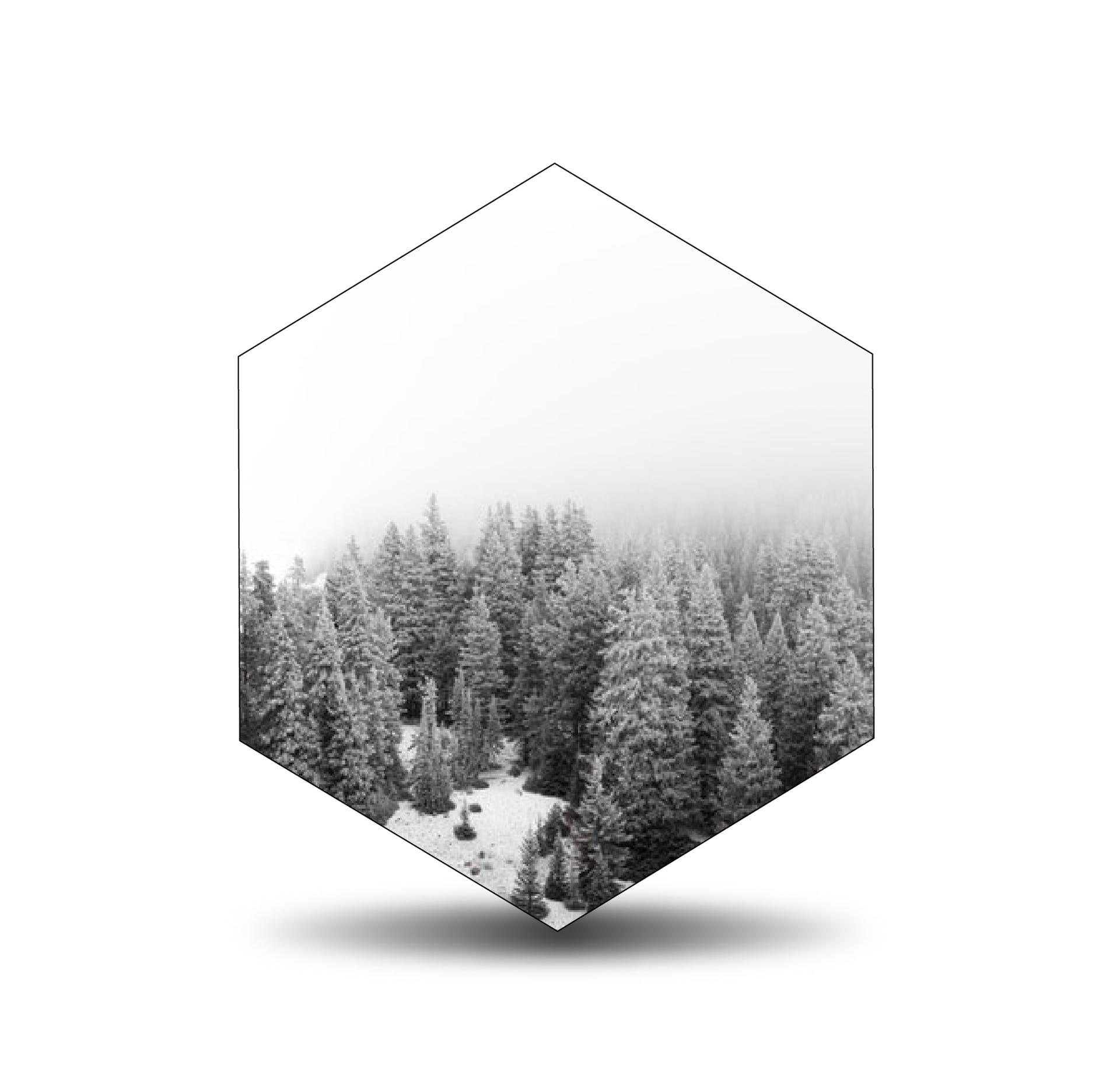 geometric pattern shapes trees