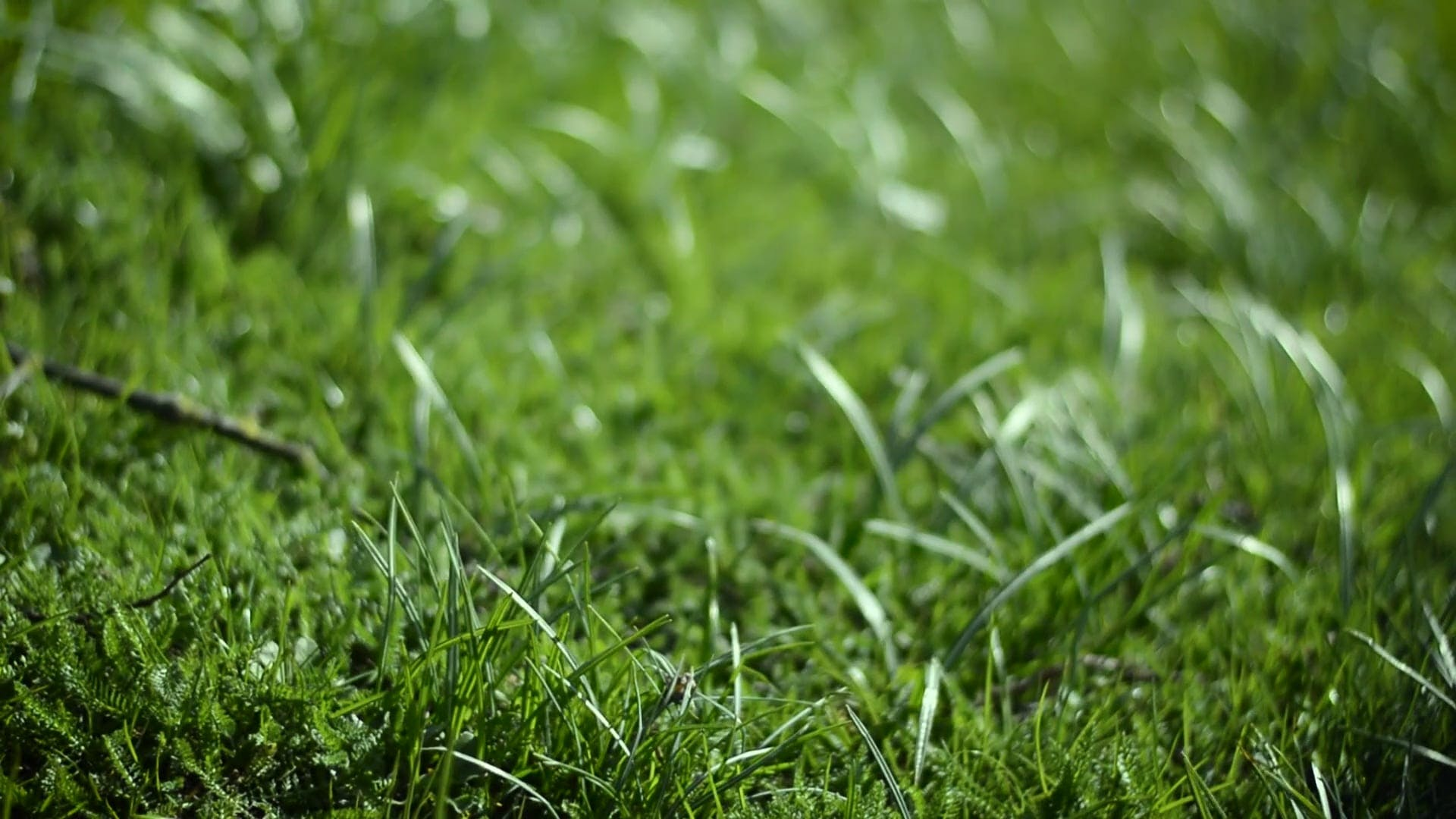 ground plants grass close-up depth of field green nature