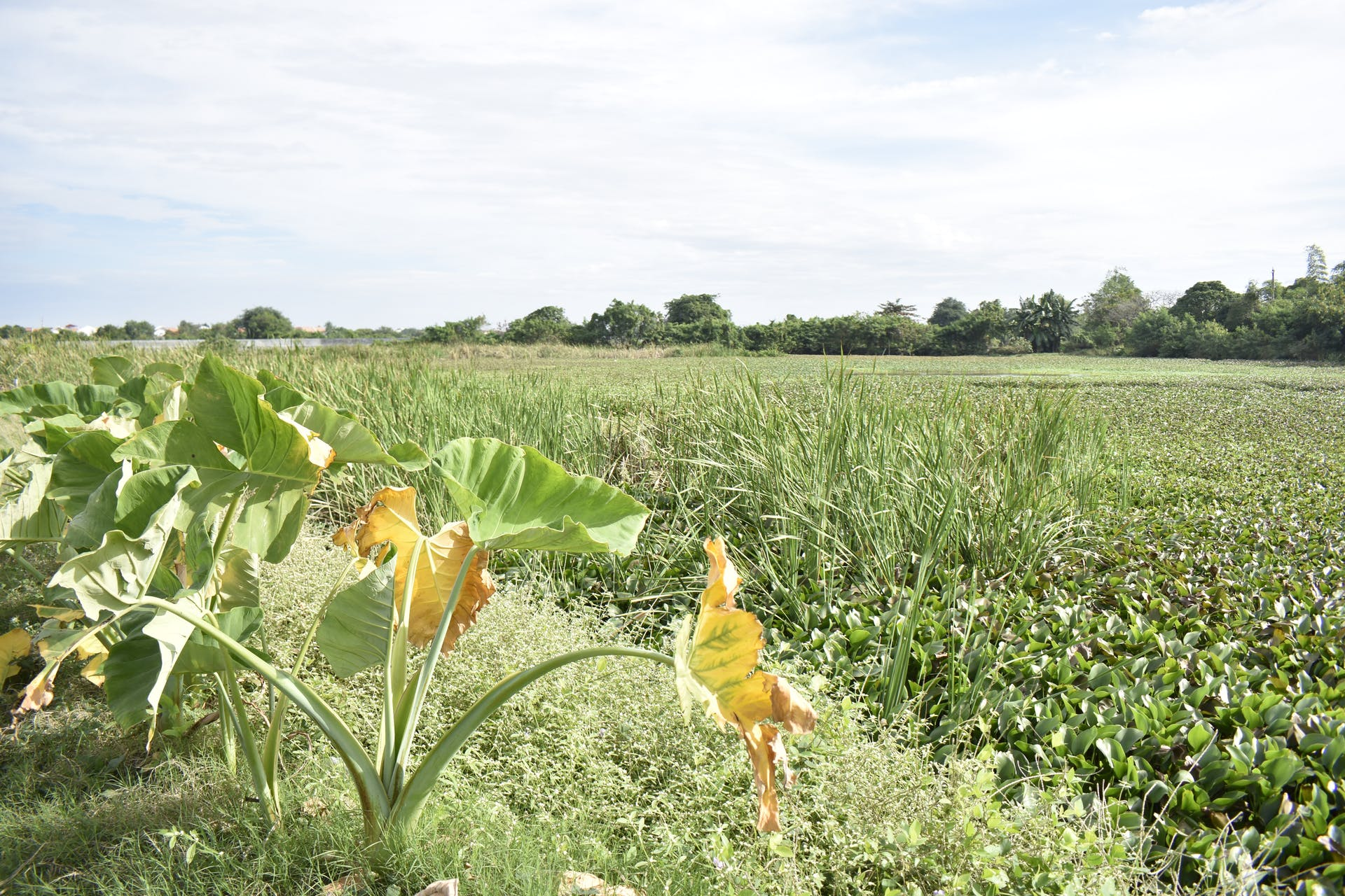 landscape green landscape farm green