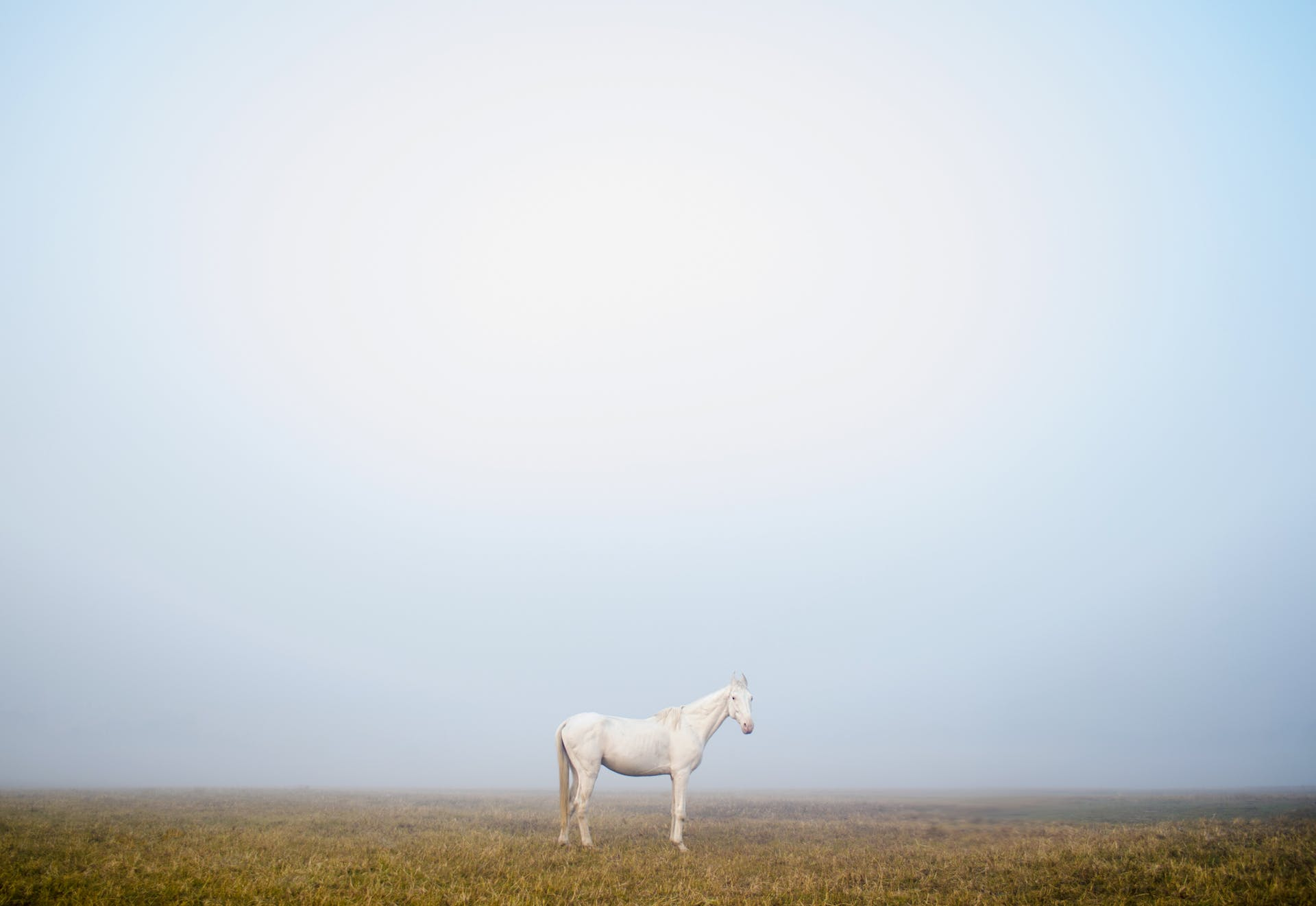 sell places peace fog best photo kolkata animals wildlife photography calm explore