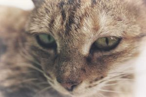 adorable pets kittens cats kitten catlover cat ilovemycat lovecats animal