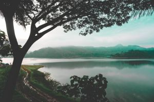 adventure green indonesia nature photography early morning tree nature dirt road water