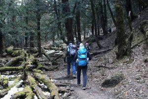 adventure mountain forest trekking trek himalaya camp camping himalayas green