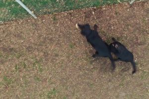aerial shot drone footage dogs buildings camera city